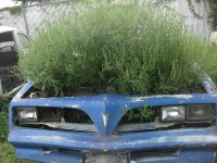 overgrown-cars-1a.jpg